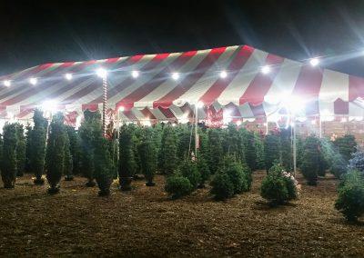 ChristmasTreeVillageGallery (38)